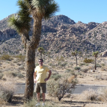 Joshua trees in the park