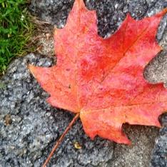 Fall colors in Boston