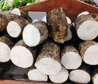 taro root