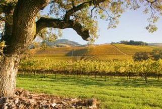 October day in Napa