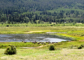 bighorn sheep at Sheep Lake